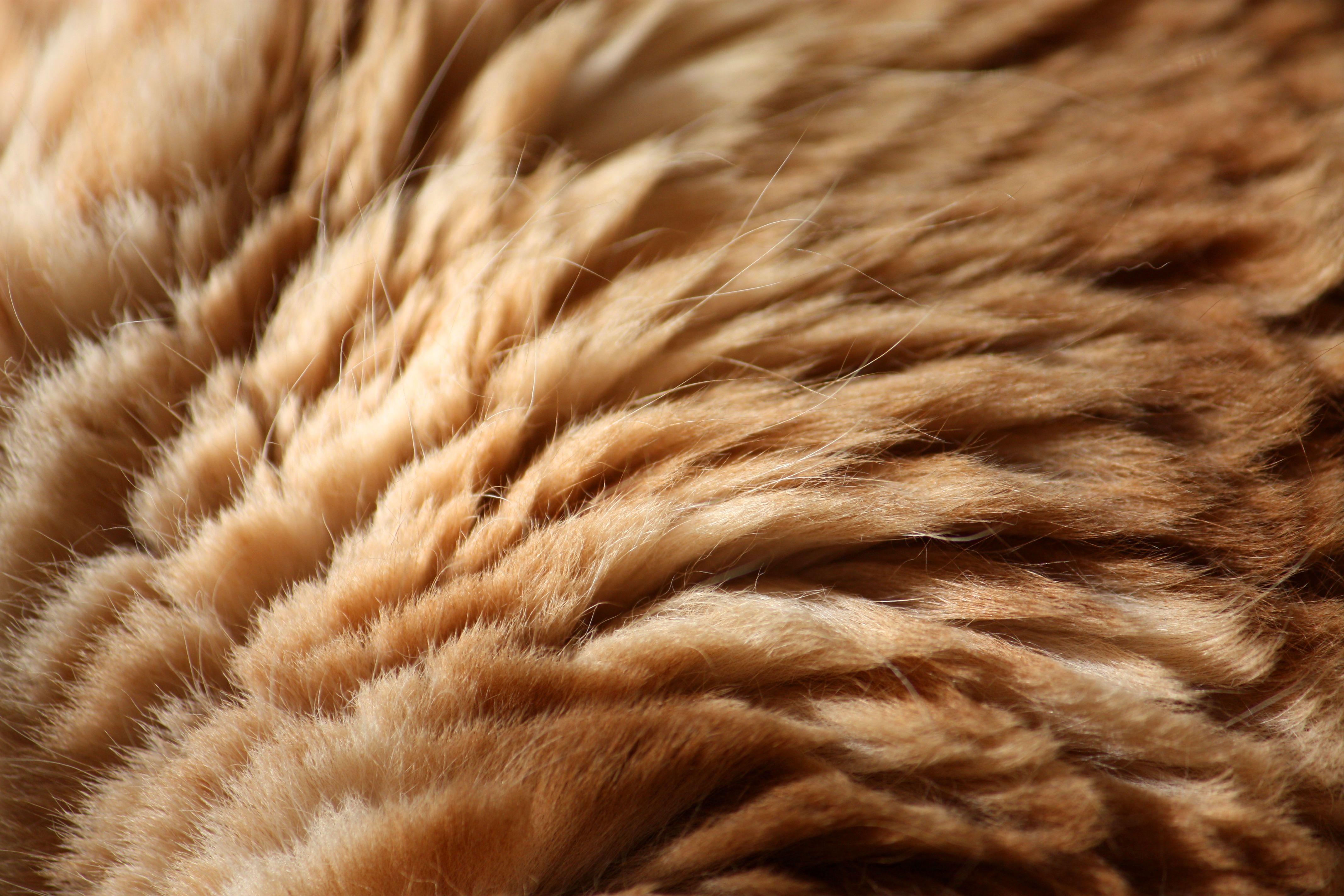 texture fur animal background - photo #8