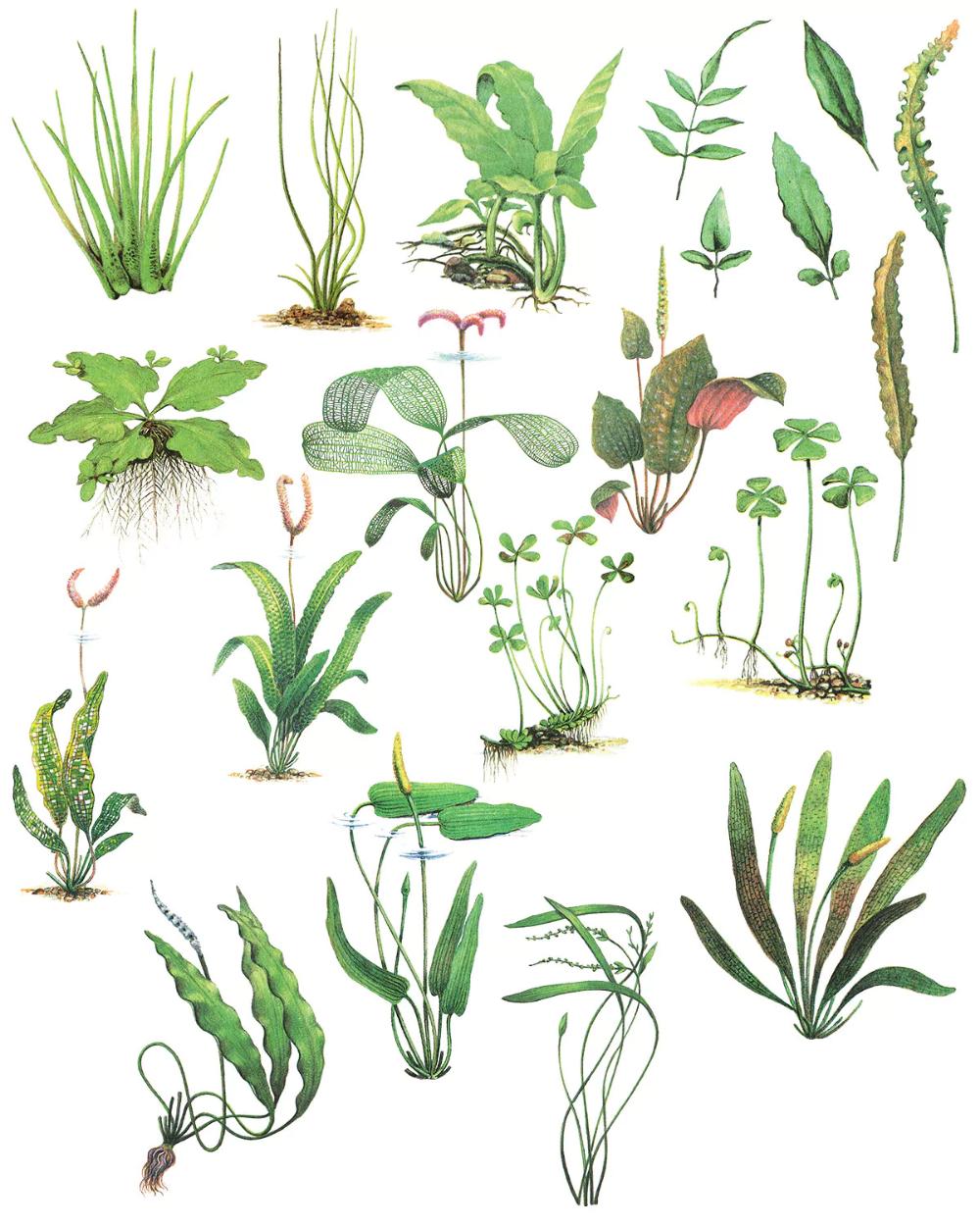 Water Plants Vol 1 De Freezeronmedia En Envato Elements Plantas En Agua Ilustracion Planta Plantillas Para Dibujar