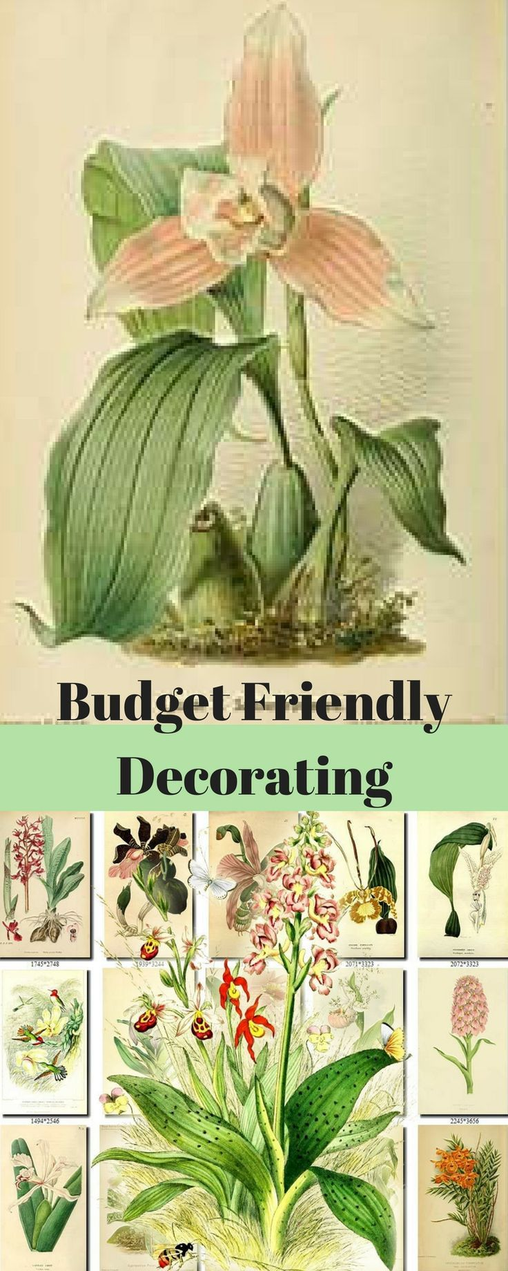 Budget friendly decorating with downloadable pictures of orchids ...