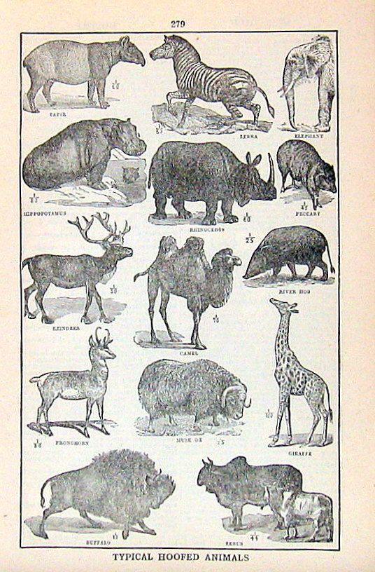 Typical Hoofed Animals 1914 Vintage by mysunshinevintage on Etsy ...