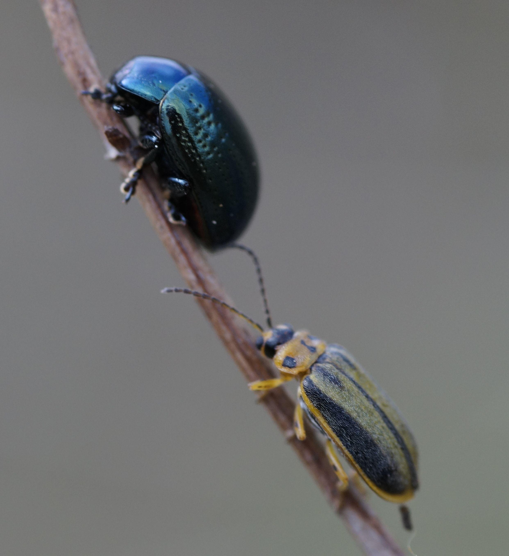 Pin by last capitan cromagnon man on macro bugs macro