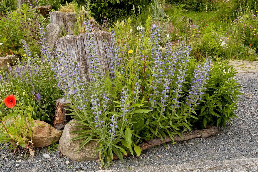Wildes Blumenbeet Mit Totholz Und Steinen Wildblumen Pointl Blumenbeet Naturgarten Garten