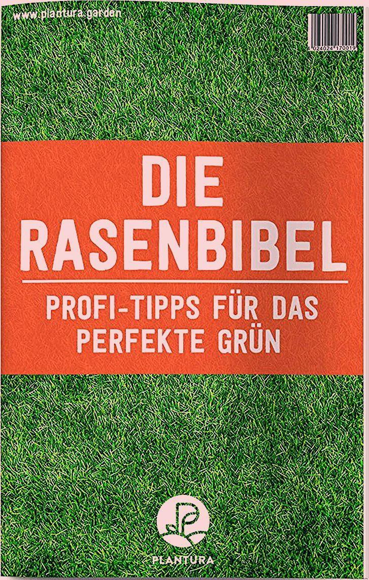 Photo of Unkraut im Rasen: Unkrautvernichter & Alternativen – Plantura