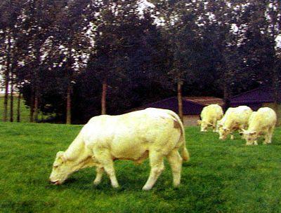 Produits fermiers en vente directe - EARL Duchemin