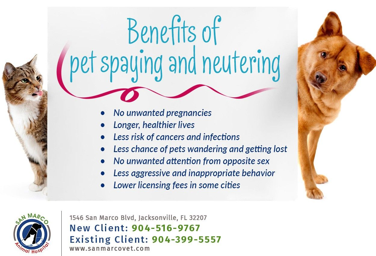 Check Us Out At Www Sanmarcovet Com If You Are Considering Spaying Or Neutering Your Cat Or Dog Our Expert Vets Per In 2020 Veterinary Services Pets Service Animal