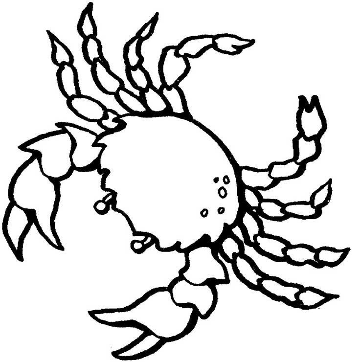 Free Printable Crab Coloring Pages For Kids Ocean Coloring Pages Animal Coloring Pages Fish Coloring Page