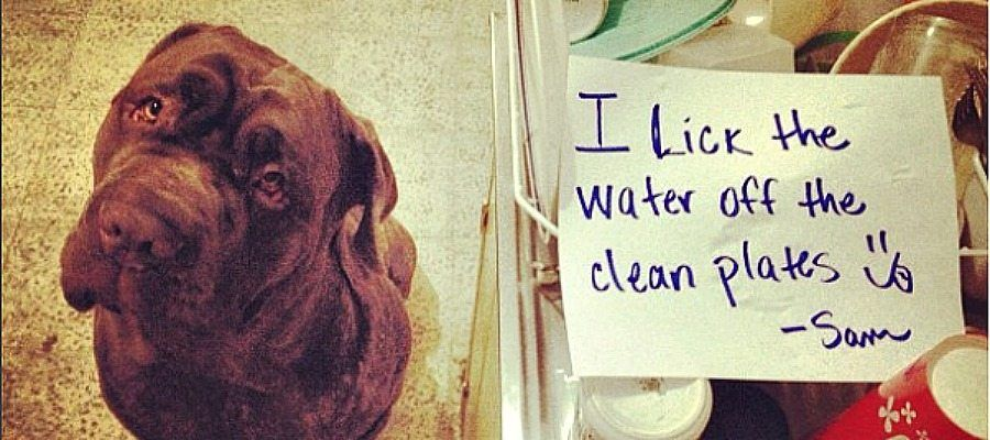 Dog Shaming Moments That Perfectly Sum Up Httpwww - 16 pictures that sum up how you feel about 2016