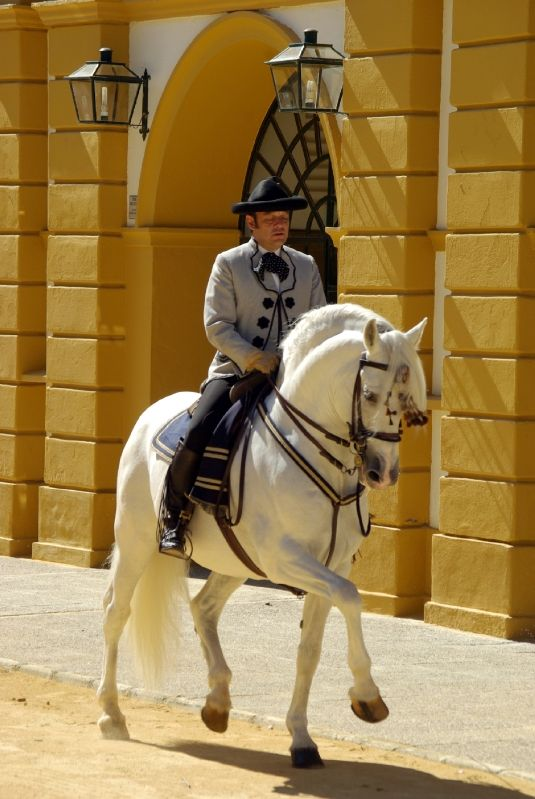 Real Escuela Andaluza Del Arte Ecuestre My Mecca Beautiful Horses Horse Spirit Animal Andalusian Horse