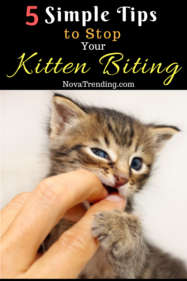 5 Simple Tips to Stop Your Kitten Biting Kitten biting