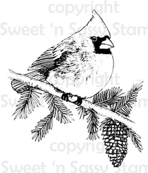 Bluebird Digital Stamp in 2020 | Bird coloring pages, Bird ...