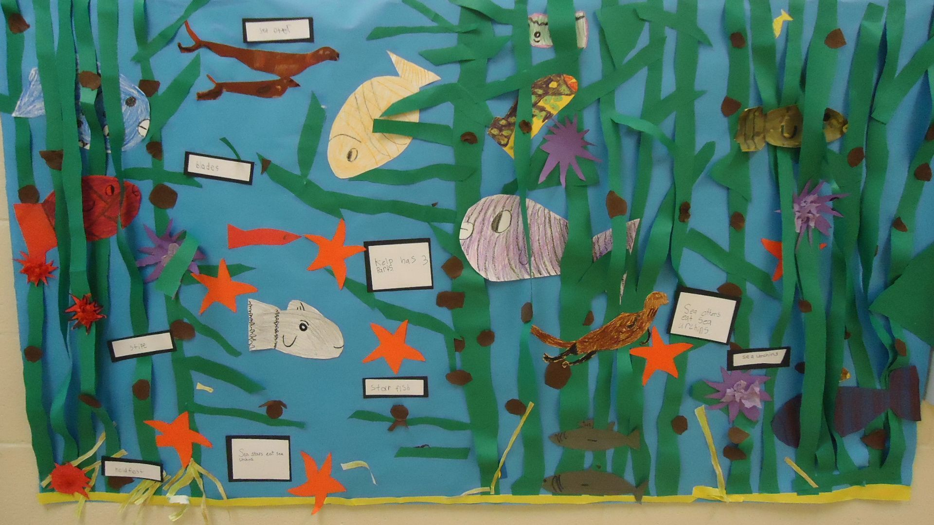 Kelp Forest Ecosystem Drawing