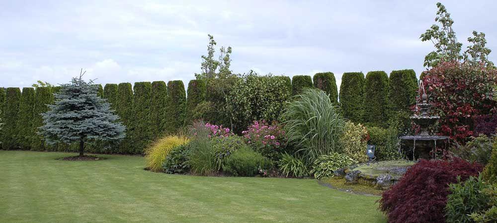 Specimin Trees For Landscaping Ideas Cork Garden Designs Landscape Designers Patio Design Ideas Garden Arou Landscape Design Landscape Modern Garden