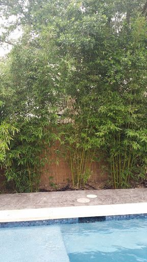 pool with bamboo - Google Search