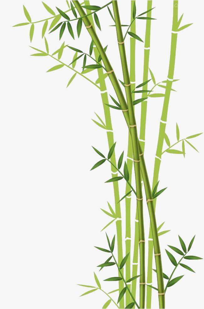 Téléchargement De Bambou, Feuilles, Les Feuilles De Bambou, La Tige De Bambou Fichier PNG et PSD pour le téléchargement libre
