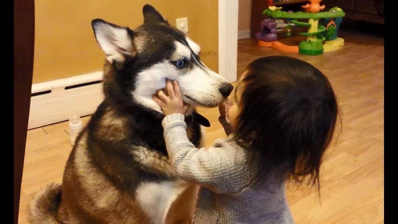 Baby Loves Siberian Husky Dog Babyhusky Baby Loves Siberian