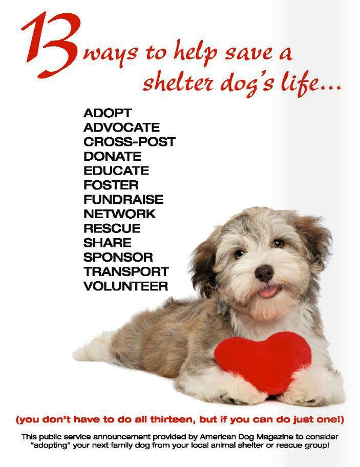 Pin By Laura Lou On Pets Quotes Puppy Adoption Shelter Dogs American Dog