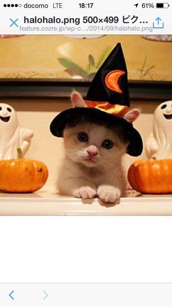 bearski on - cute cat halloween costume ideas
