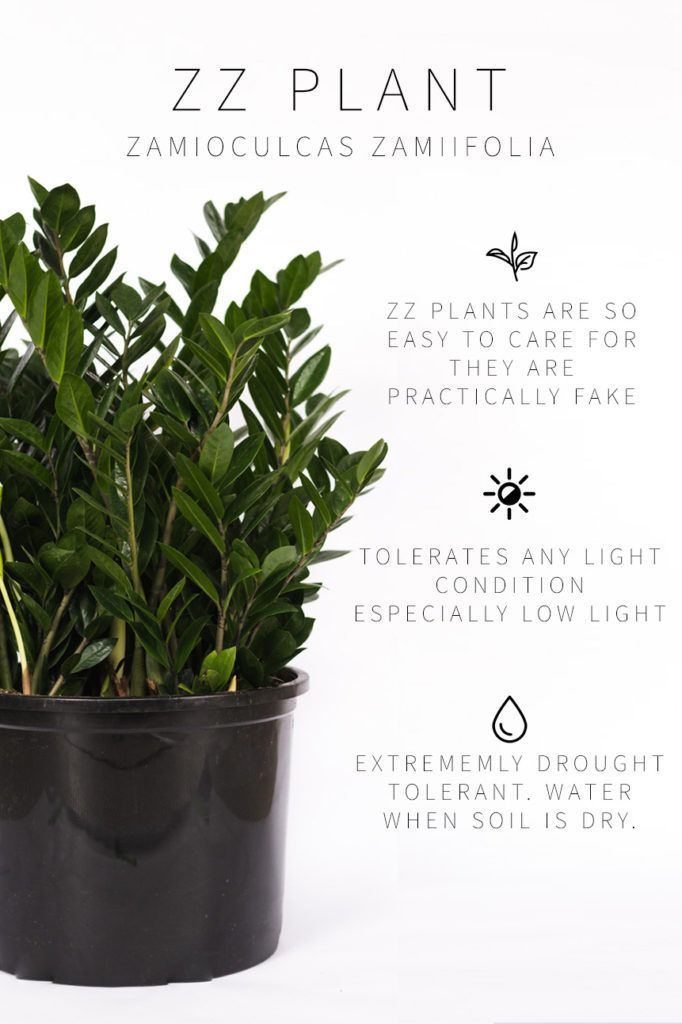 Master List Of Low Light Indoor Plants Plants Indoor