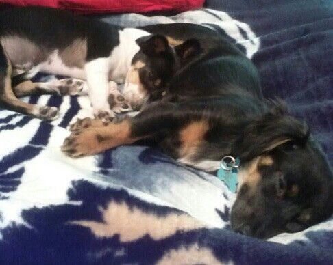 My girls taking a nap...on my bed....lol