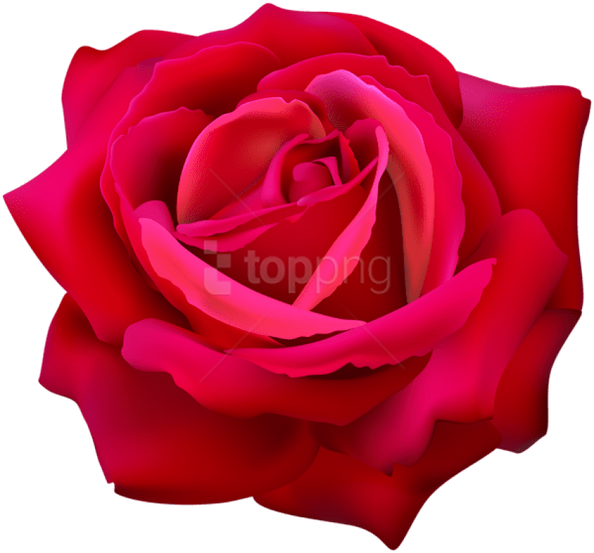 Download Red Rose Flower Png Images Background Png Free Png Images Flower Png Images Red Rose Flower Rose Flower Png