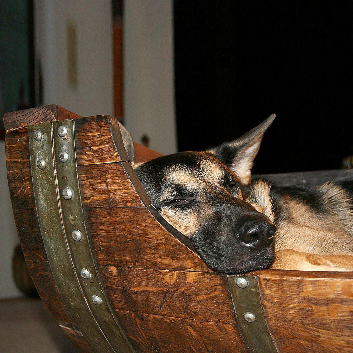 Reclaimed Wine Barrel Dog Bed Barrel dog bed, Wine