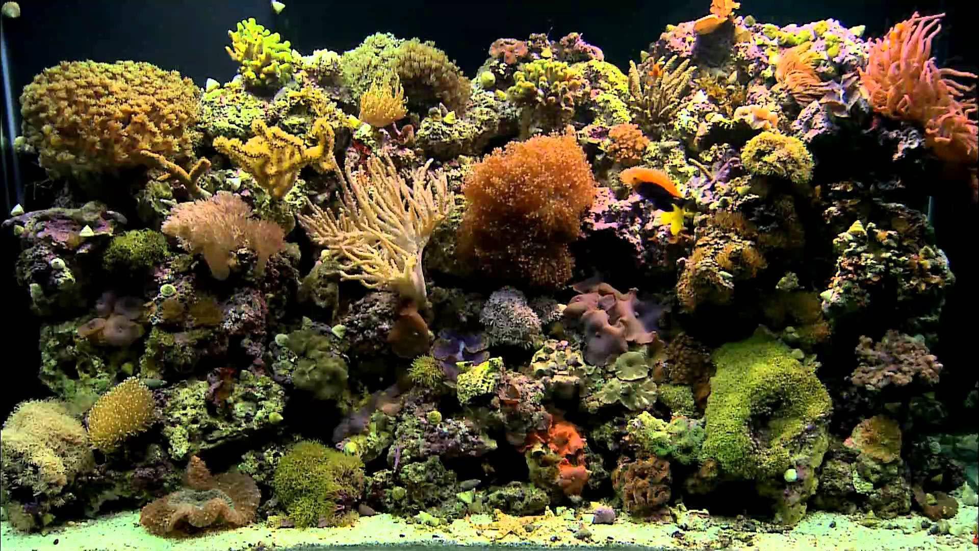 coral reef aquarium background aquarium plants