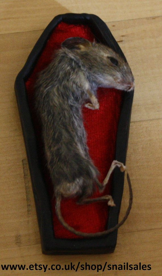 Hey, I found this really awesome Etsy listing at https://www.etsy.com/listing/201711751/anthropomorphic-taxidermy-mouse-coffin