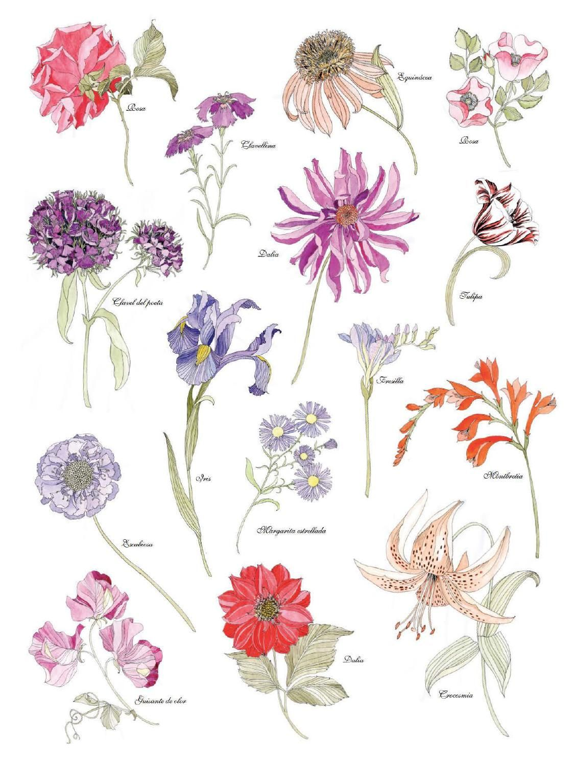 Floribunda. Flores para pintar / mtm editores   Croquis arquitectura ...