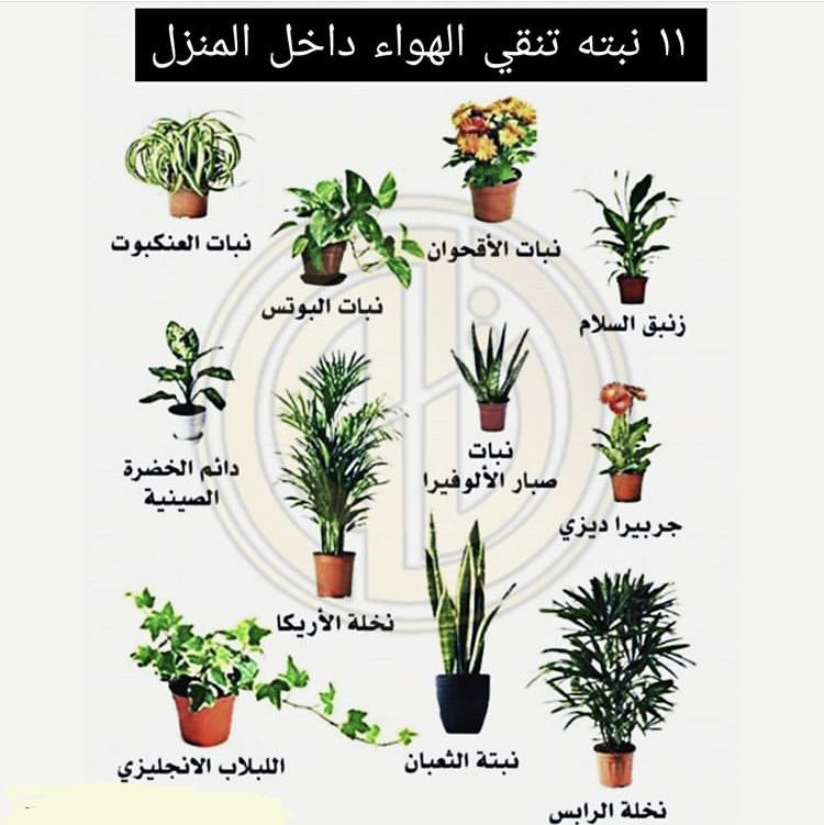 Pin By Ahmed1 Ahmed1 On زراعه Plant Decor Indoor Plants Trees To Plant