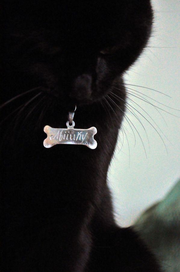 Black cat - arkii92 Miiuky