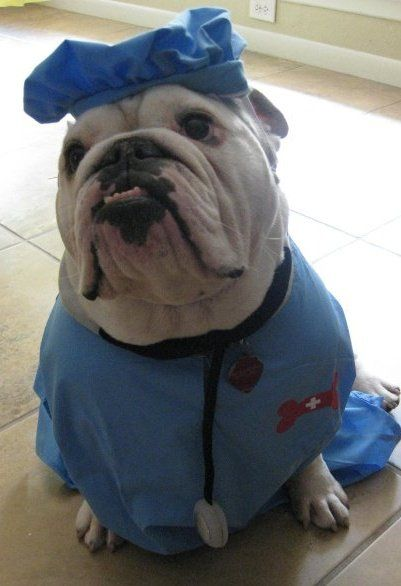 Bulldog Doctor Costume Baby Dogs Cute Puppies Dog Doctor