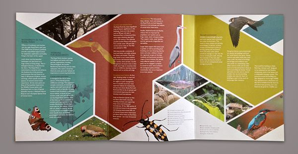 Biodiversity In The Royal Parks Beautiful Brochure Design Example 3