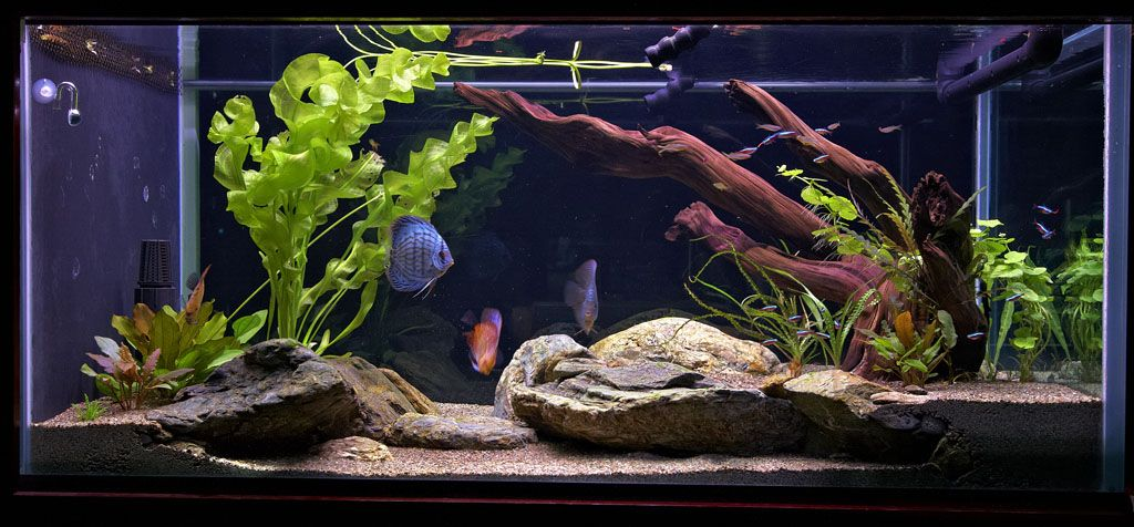 180 Reef To Planted Discus Tank Page 4 Discus Tank Discus Reef