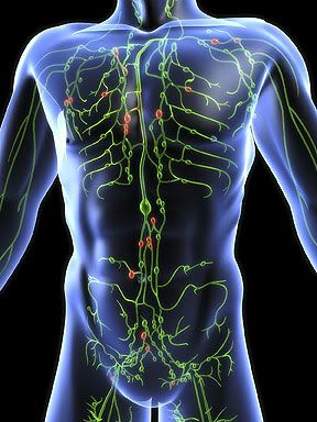 external image lymphatic-system.jpg