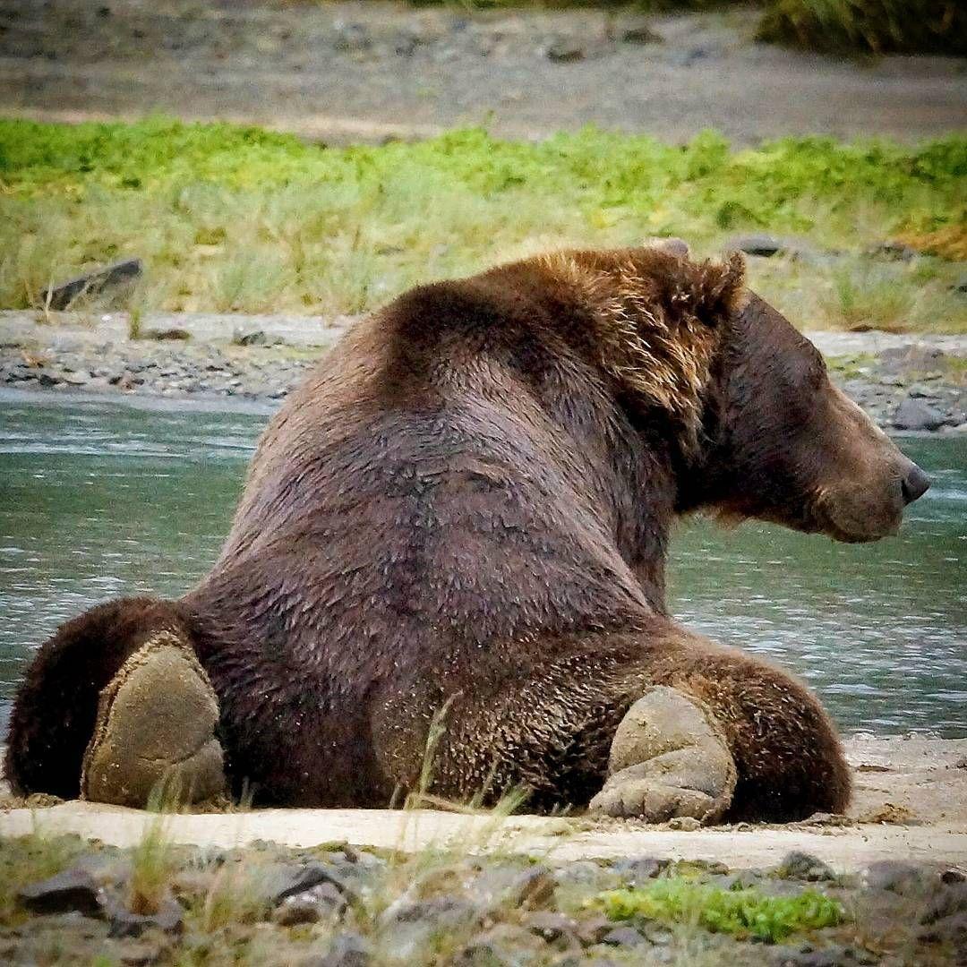 deabd372021cd5693abbb7a30a5ab7d3.jpg (1080×1080) Bear