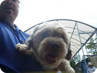 Pin by Lisa A on Adoptable Dogs Tibetan terrier, Dogs, Pets