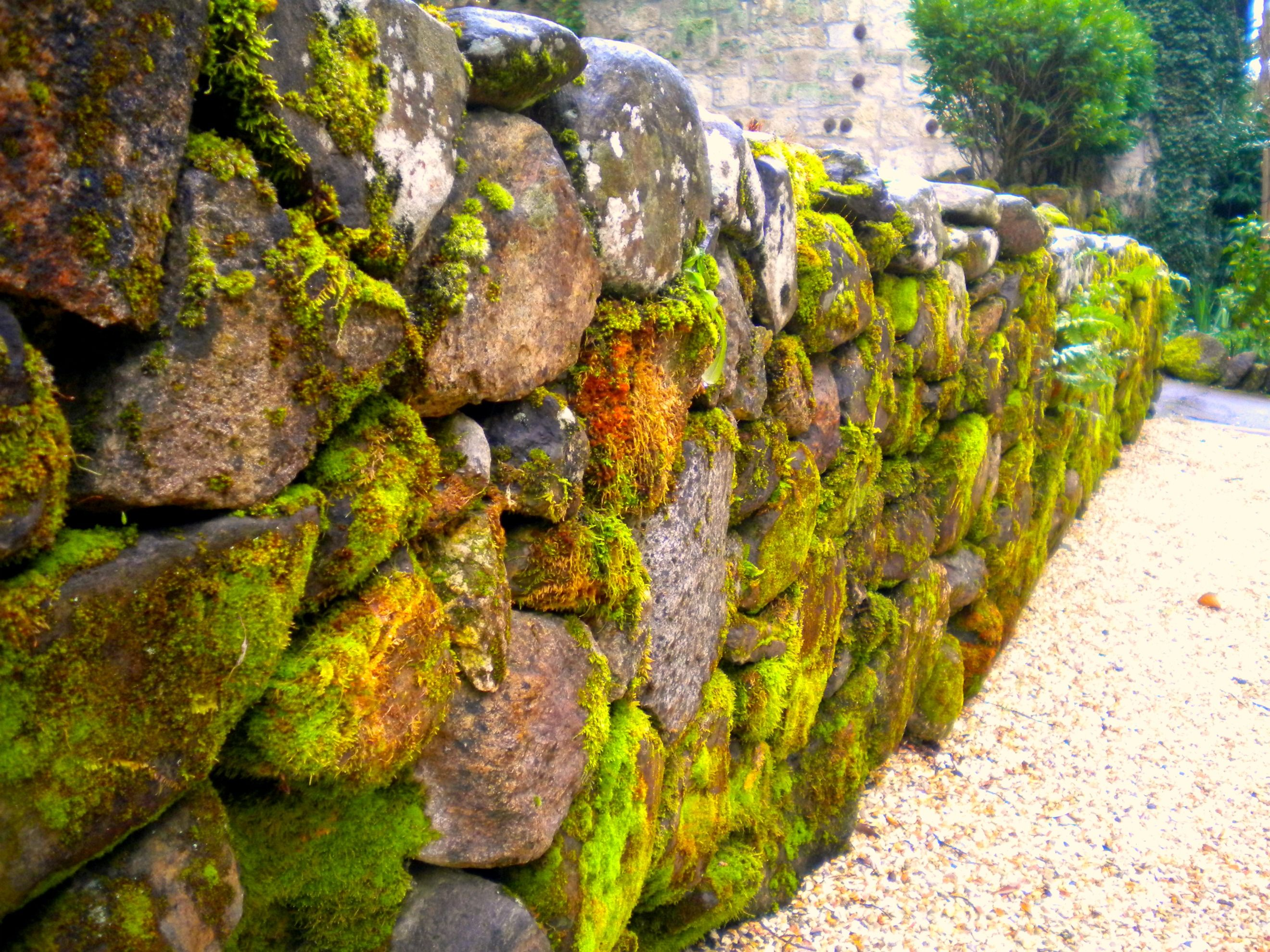 Moss on the rock fence (1) From: The Glam Nomad, please visit ...