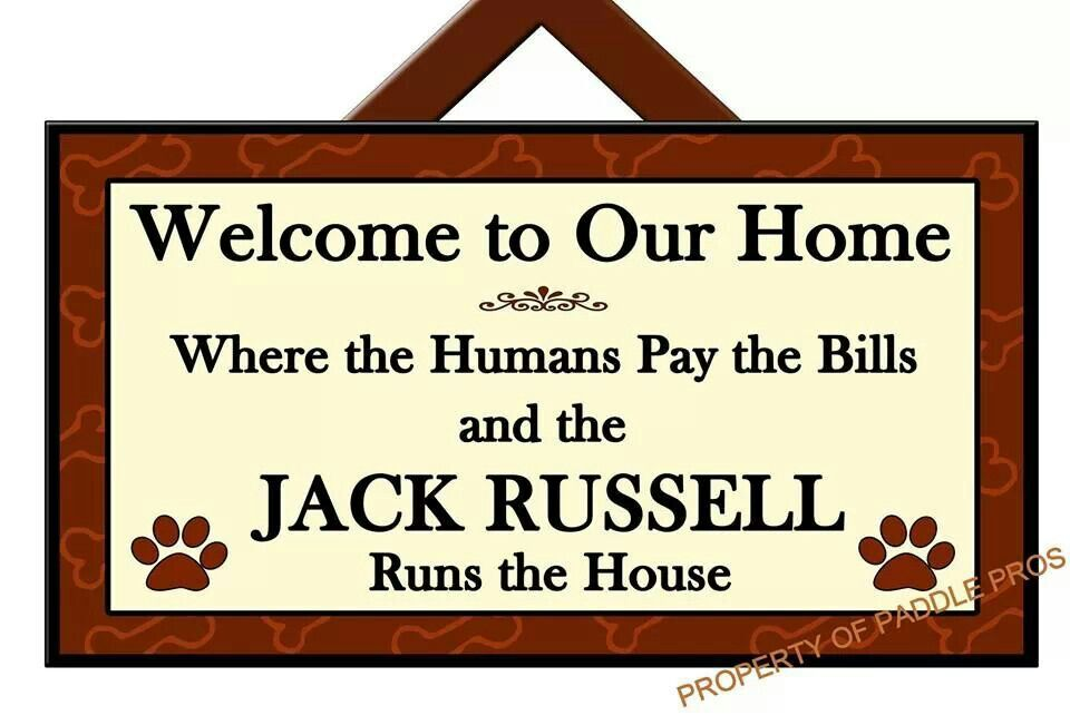 .Jack Russell runs the House but the Dachshund dictates the proper dog/human etiquette
