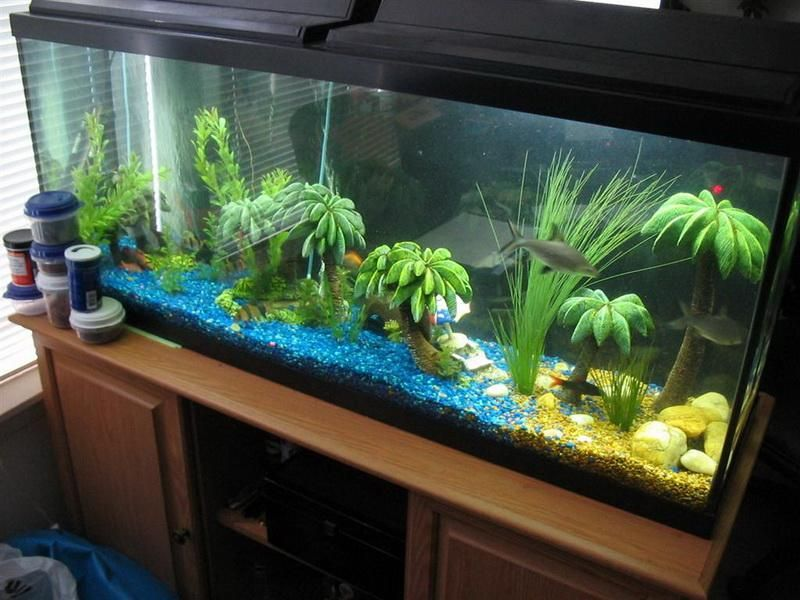 Blue fish tank dector ideas pictures of fish tank for Aquarium decoration ideas
