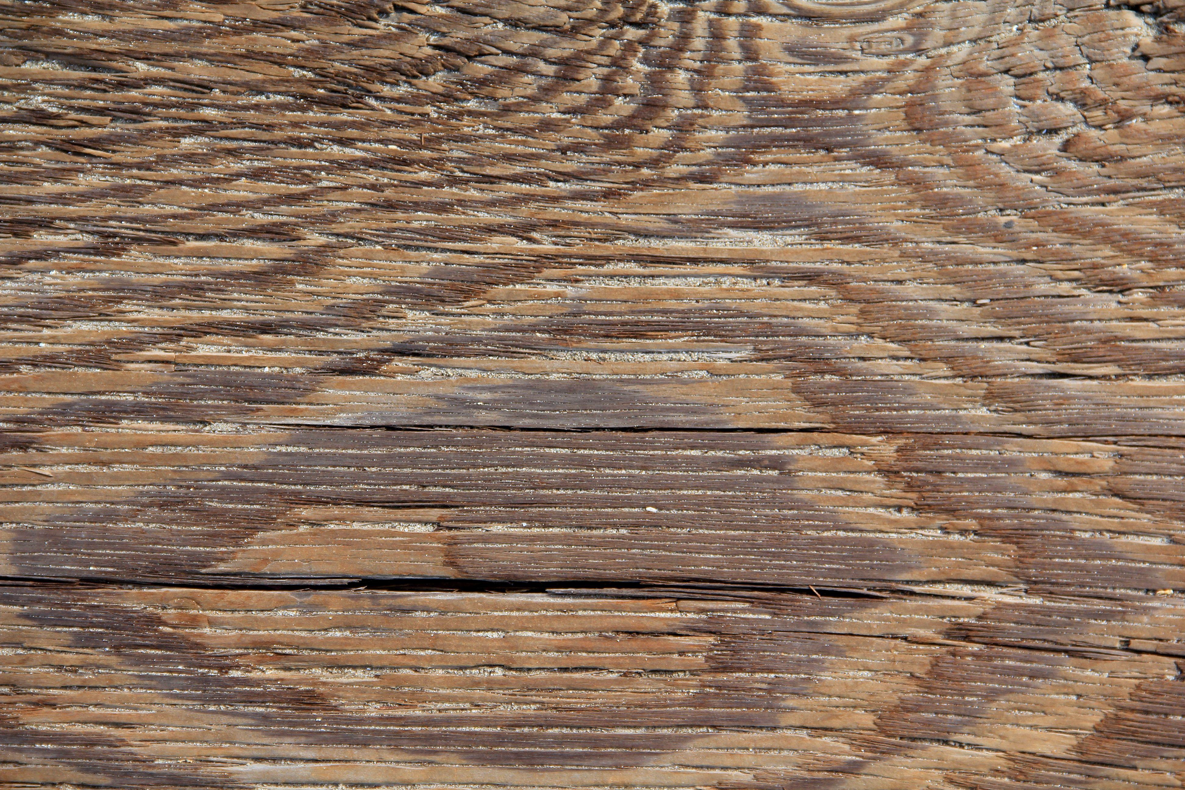 Wood Texture wood grain light plank maple oak walnut cedar.jpg ...