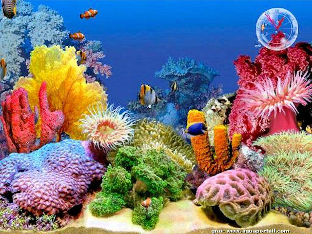 Wistiti57 1306562040 Ecran De Veille Poissons Jpg 640 480 Dessin Mer Aquariums Poisson Tropical