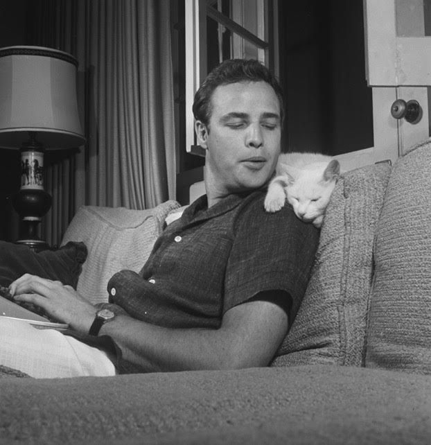 Marlon Brando with cat..