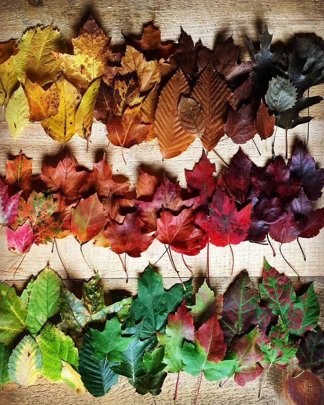 The Most Colorful Season Of The Year Fall Wallpaper Seasons Of The Year Fall Color Palette
