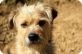 Pin on Rescue me please desperate any animal in need