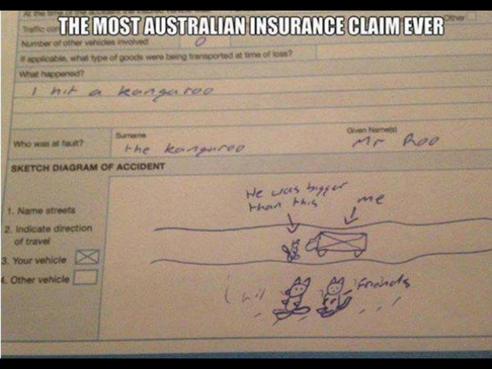 The Most Australian Insurance Claim Ever Car Hits Kangaroo