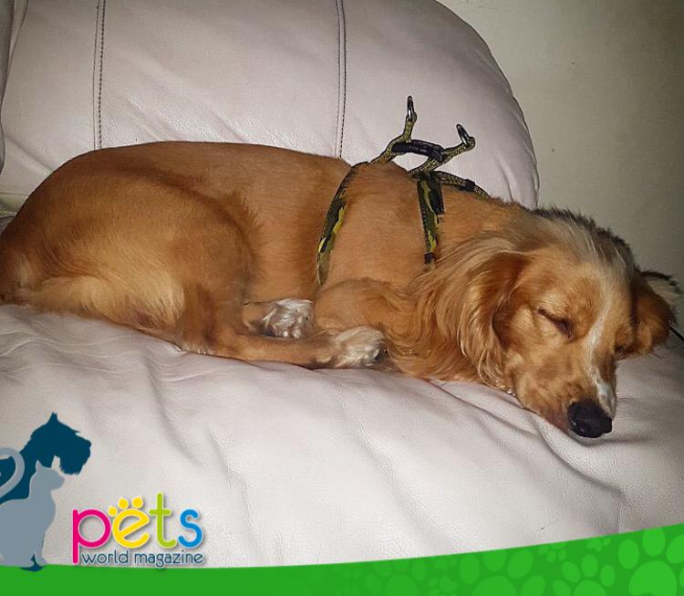 Buenas noches 💤   #PetsWorldMagazine #RevistaDeMascotas #Panama #Mascotas #MascotasPanama #MascotasPty #PetsMagazine #MascotasAdorables #Perros #PerrosPty #PerrosPanama #Pets #PetsLovers #Dogs #DogLovers #DogOfTheDay #PicOfTheDay #Cute #SuperTiernos