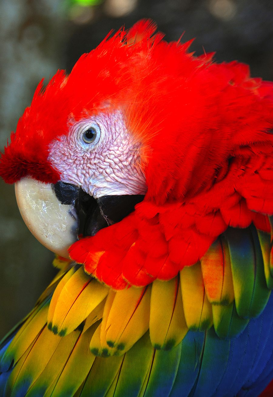 Roja Adalah : adalah, FOUND, Colorful, Parrots,, Birds, Parrot