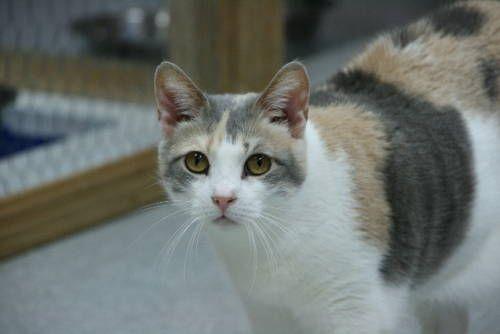 Pin On Cute Pets In Ebay Classifieds
