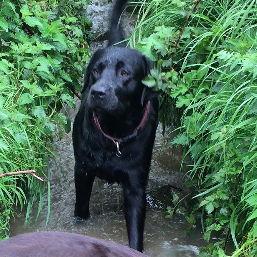 You Carn T See Me In Here Can You Yes Hettie I Can See You Myworld Mylife Uk Labrador Retriever Dog Dog Love Cute Dogs
