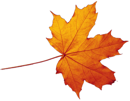 Transparent Autumn Leaves Falling Png Png 415 323 Autumn Leaves Art Fall Leaves Drawing Autumn Leaves